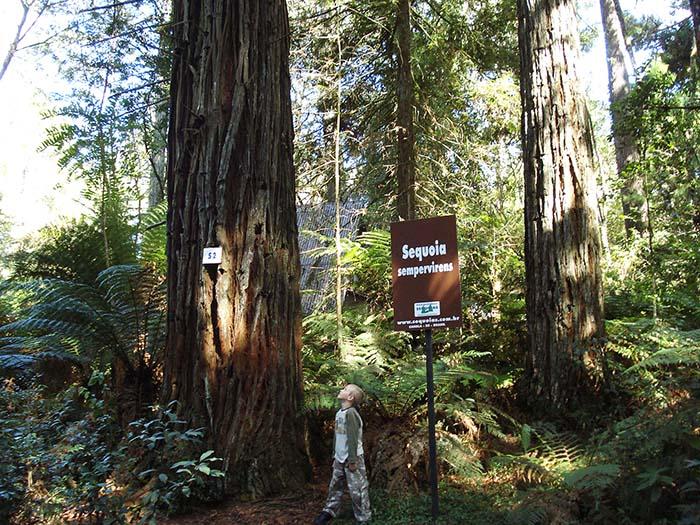 Parque das Sequoias - Canela