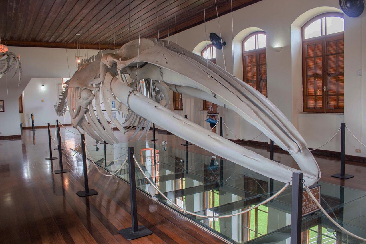 Museu da Pesca - Santos