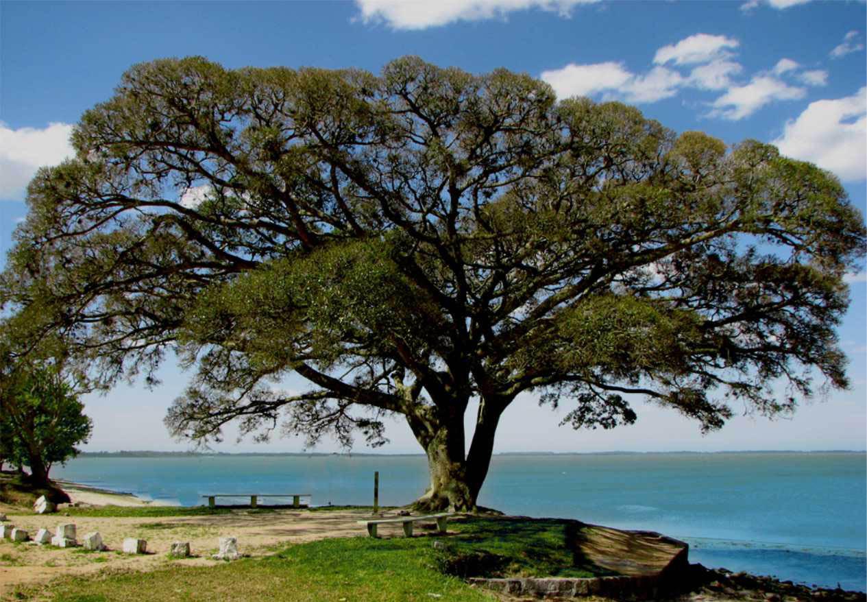 São Lourenço do Sul - Lagoa dos Patos