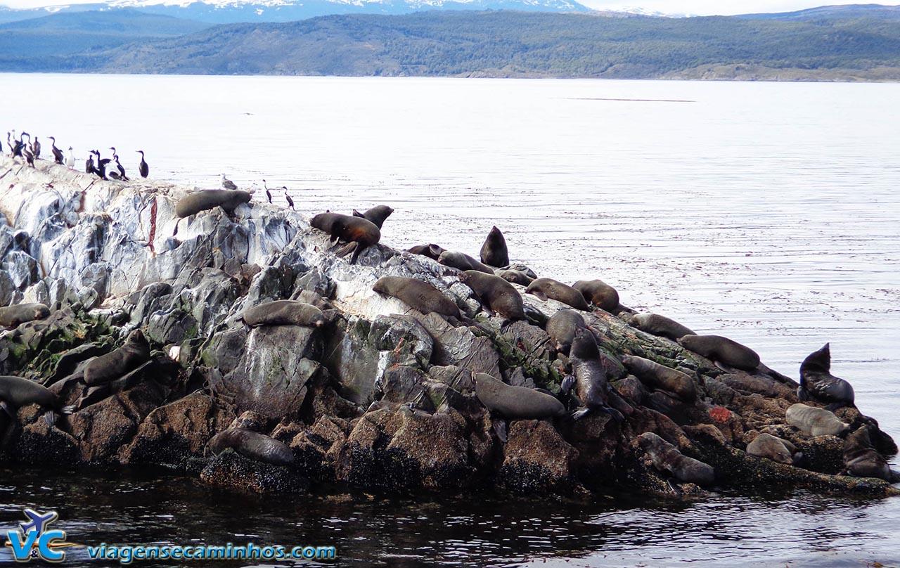 Ilha dos Lobos - Canal de Beagle - Ushuaia
