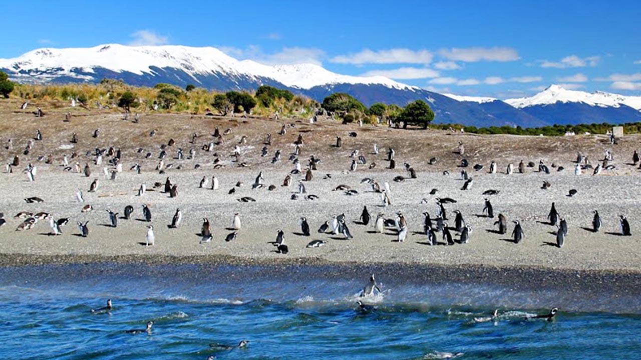 Pinguinera (Isla Martillo)