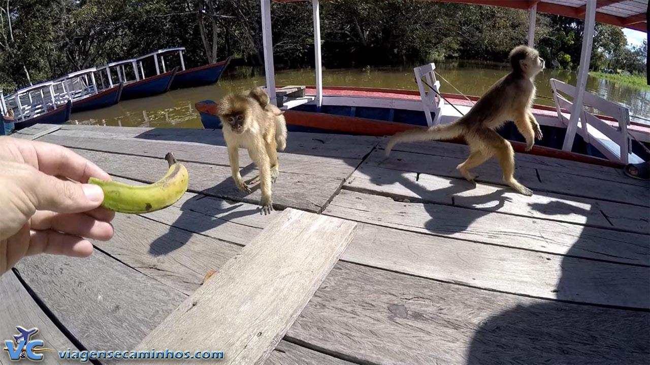 Macacos prego, junto ao restaurante flutuante