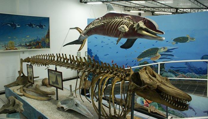 Museu Oceanográfico Almirante Paulo Moreira