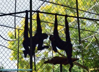 Zoo Balneário Camboriú