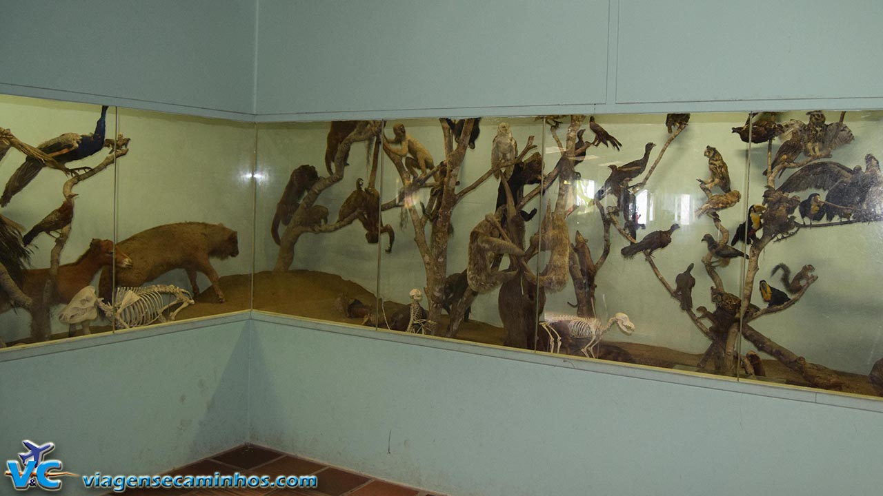 Animais empalhados do Zoo Balneário Camboriú