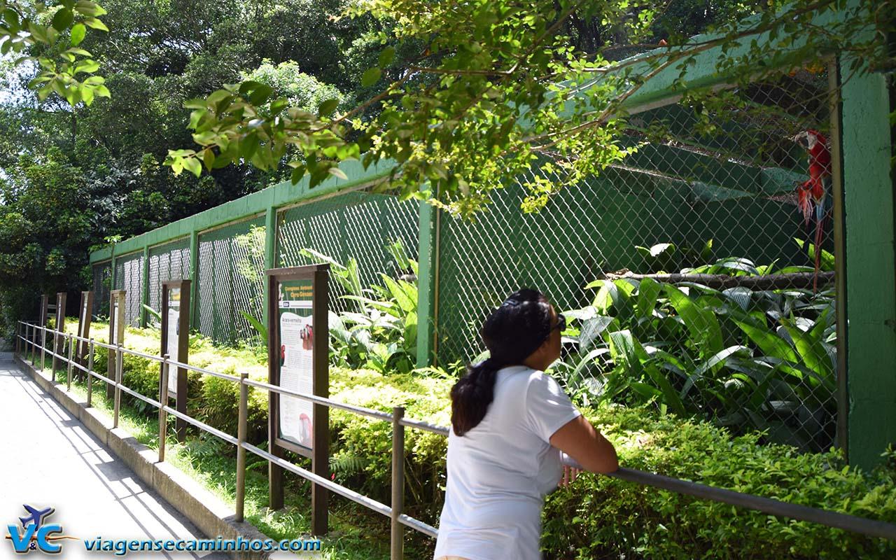 Araras do Zoo de Balneário Camboriú