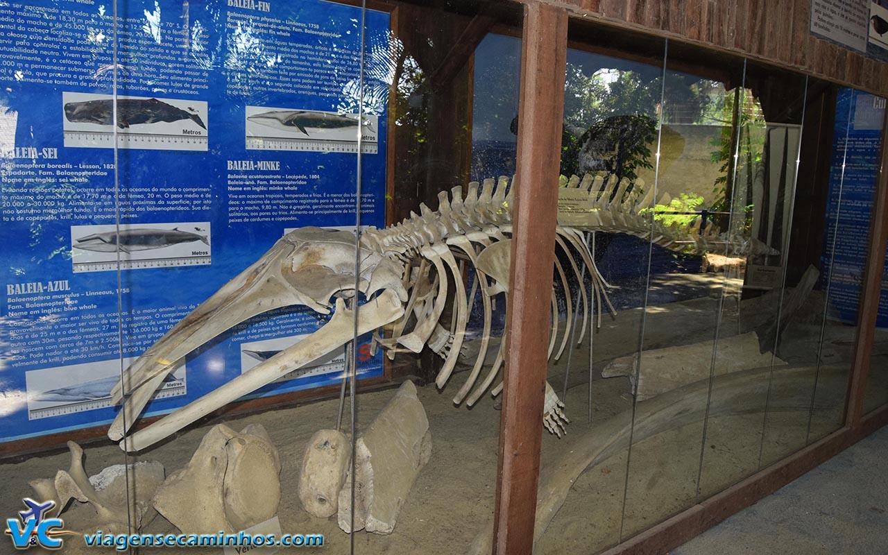 Museu arqueológico do Zoo Balneário Camboriú