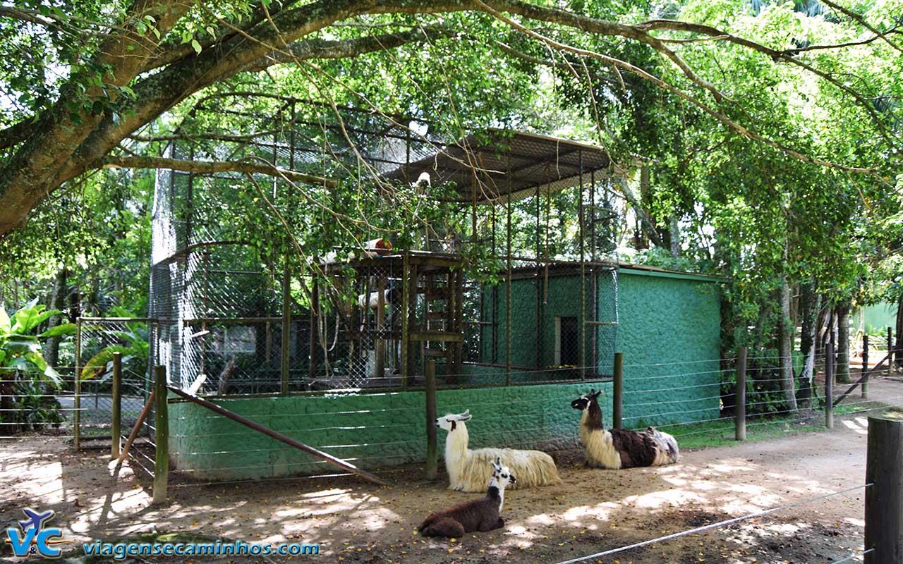 Lhamas do Zoo de Balneário Camboriú