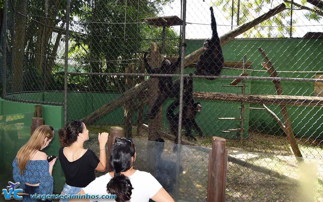 Macacos do Zoo de Balneário Camboriú