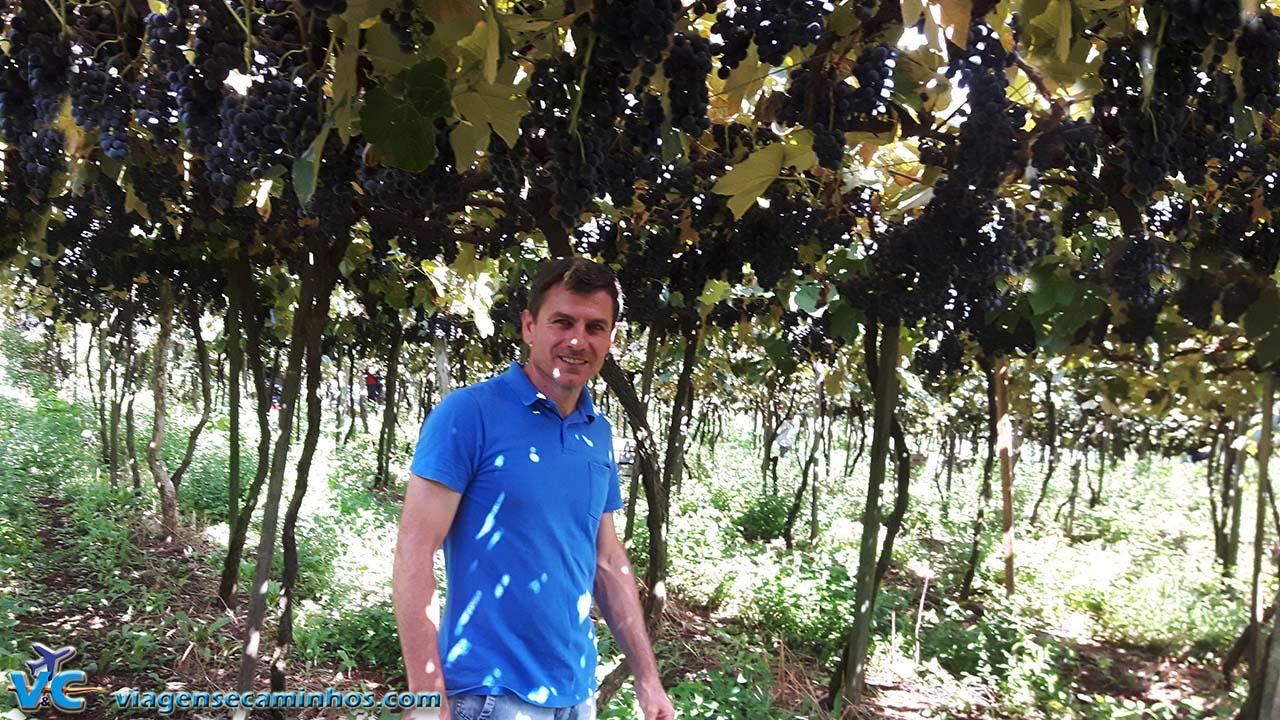 Otávio Rocha - Parreiral de uva