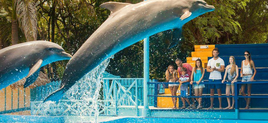 Golfinhos no Manati Park em punta Cana